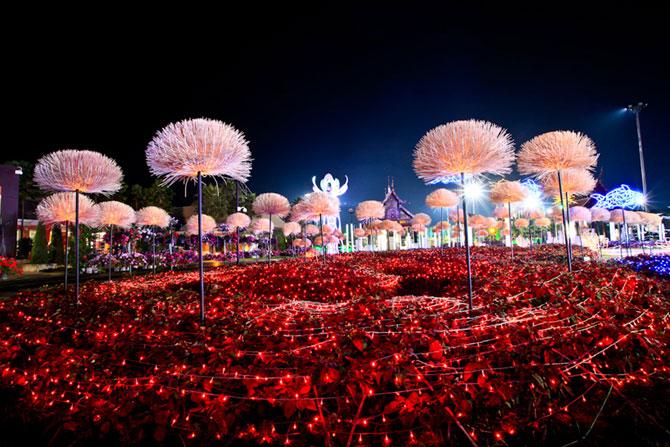 Lotusi cu doua milioane de petale din Thailanda - Poza 1