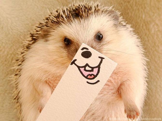 Cel mai simpatic arici, vedeta pe Internet - Poza 1