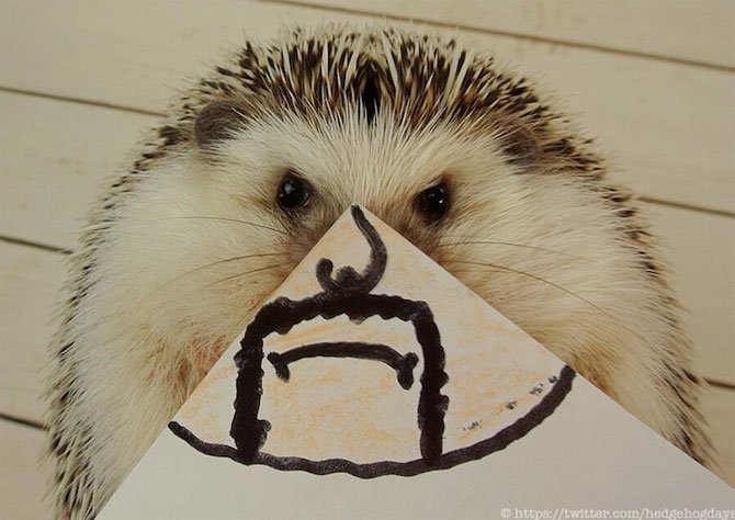 Cel mai simpatic arici, vedeta pe Internet - Poza 2