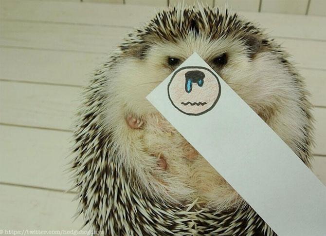Cel mai simpatic arici, vedeta pe Internet - Poza 4