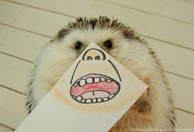 Cel mai simpatic arici, vedeta pe Internet - Poza 5
