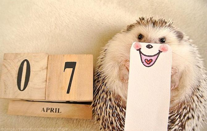 Cel mai simpatic arici, vedeta pe Internet - Poza 8