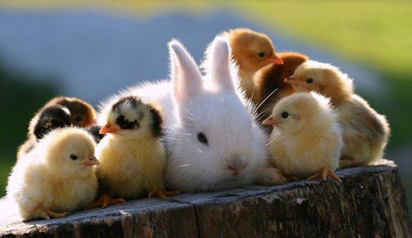 Atentie: Animale simpatice in 45 de poze! - Poza 6