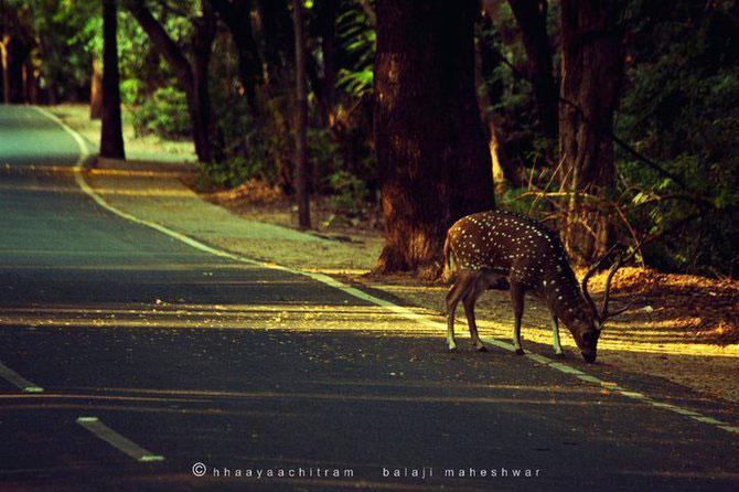 Calatorie prin India, cu Balaji Maheshwar - Poza 1