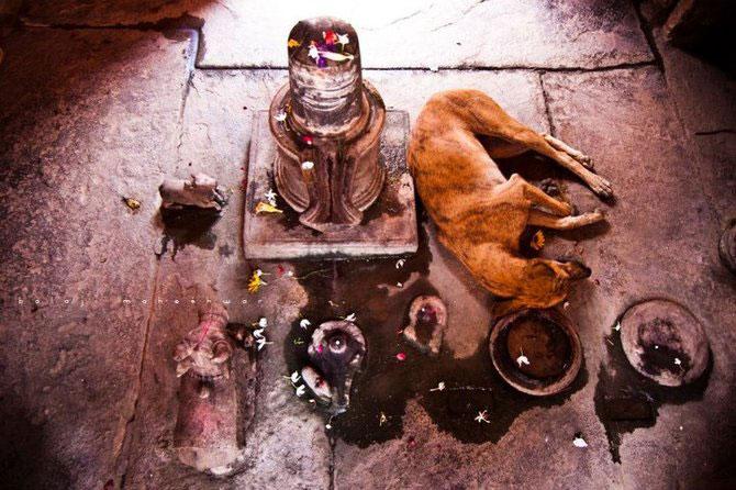 Calatorie prin India, cu Balaji Maheshwar - Poza 22