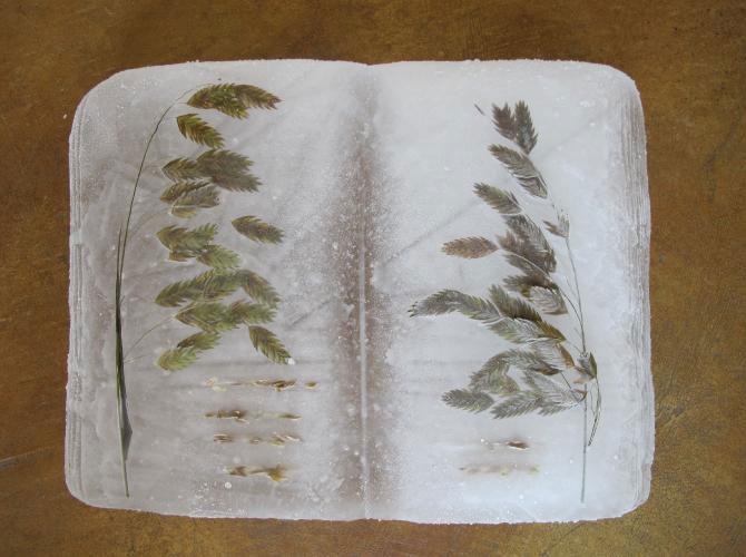 Carti plutitoare cu seminte, de Basia Irland - Poza 2