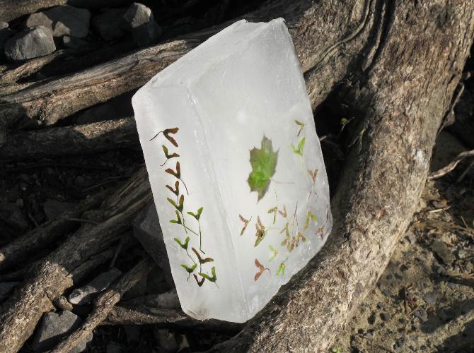 Carti plutitoare cu seminte, de Basia Irland - Poza 5