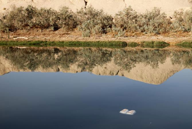 Carti plutitoare cu seminte, de Basia Irland - Poza 6