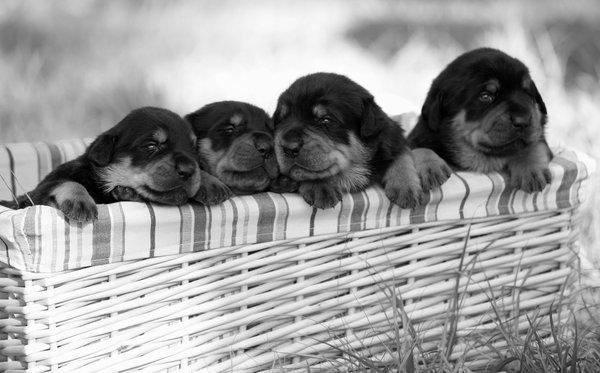 Atentie: Animale simpatice in 45 de poze! - Poza 7