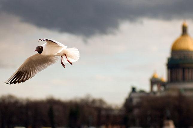 Fotografie profesionista de Alexander Alekseev - Poza 57
