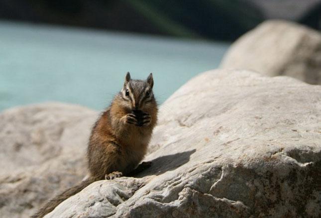 30 de fotografii superbe ale lacului Louise - Poza 7