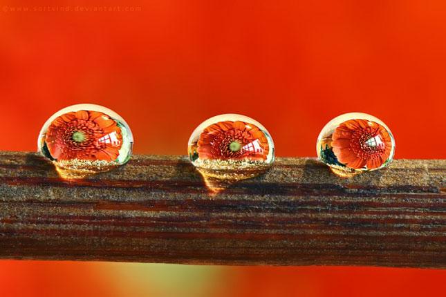 Sortvind - Macrofotografie: 40 de exemple impresionante - Poza 21