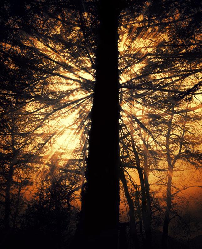 Sortvind - Macrofotografie: 40 de exemple impresionante - Poza 10