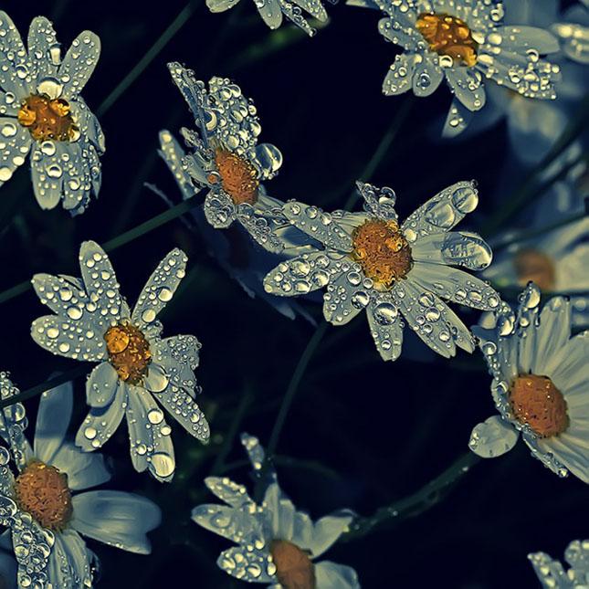 Sortvind - Macrofotografie: 40 de exemple impresionante - Poza 11