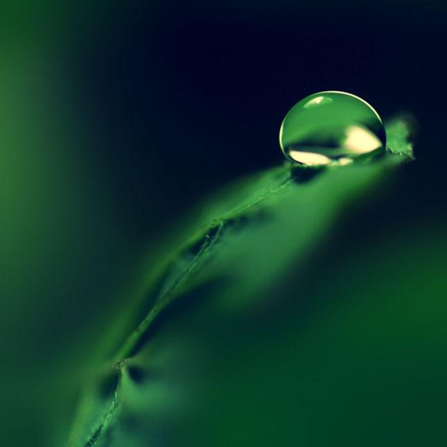 Sortvind - Macrofotografie: 40 de exemple impresionante - Poza 18