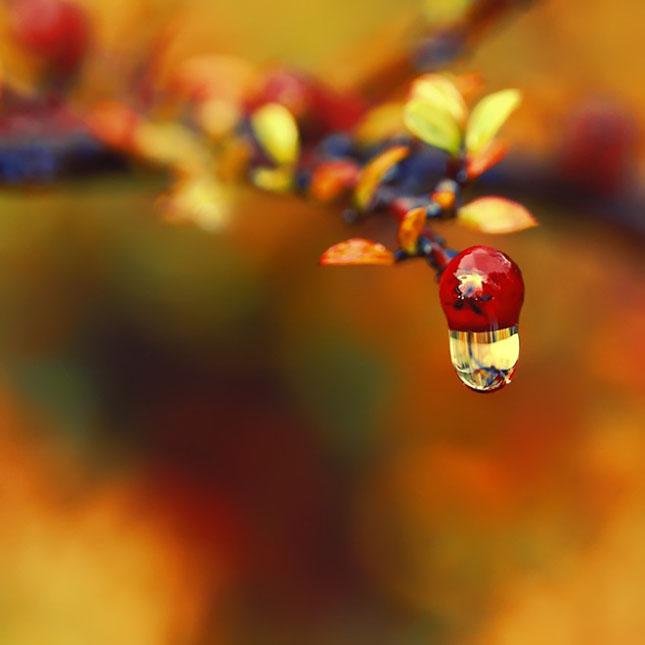 Sortvind - Macrofotografie: 40 de exemple impresionante - Poza 27