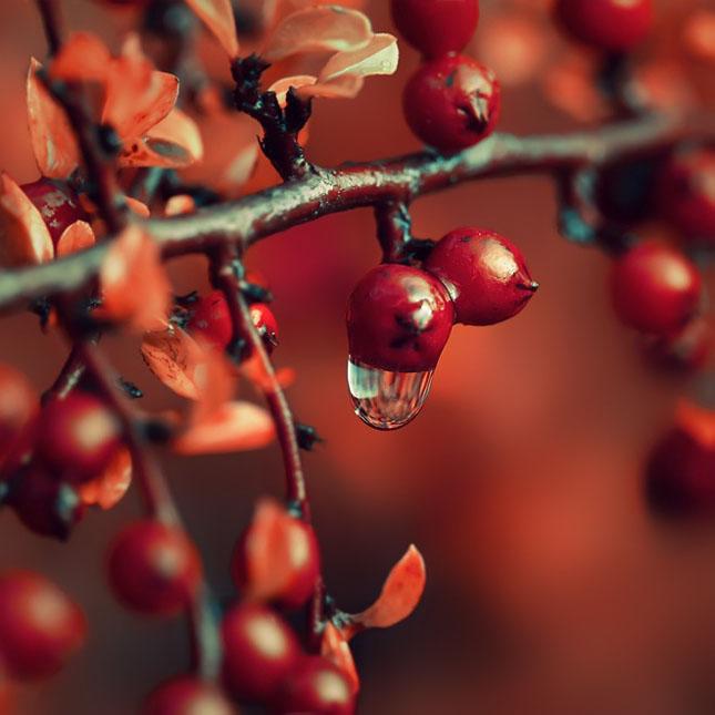 Sortvind - Macrofotografie: 40 de exemple impresionante - Poza 4
