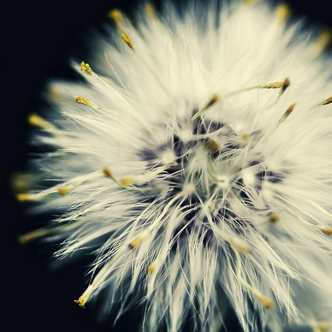 Sortvind - Macrofotografie: 40 de exemple impresionante - Poza 6