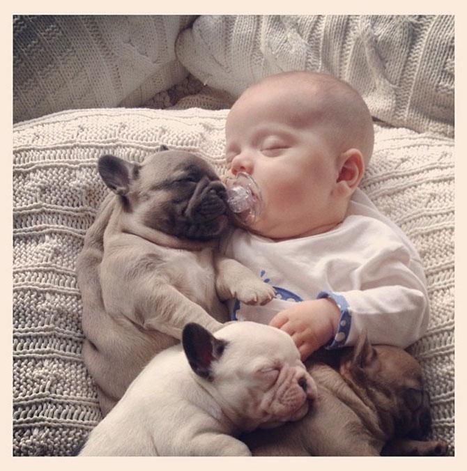 Bebelusul si bulldogii francezi - Poza 4