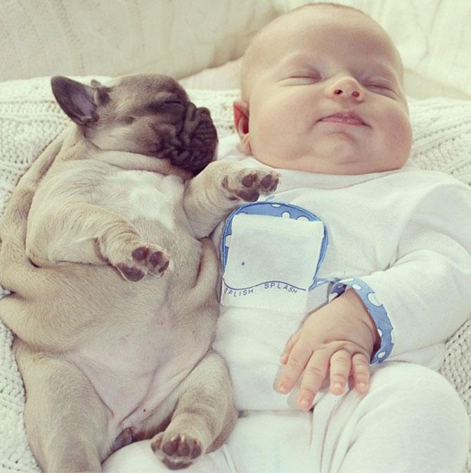 Bebelusul si bulldogii francezi - Poza 8