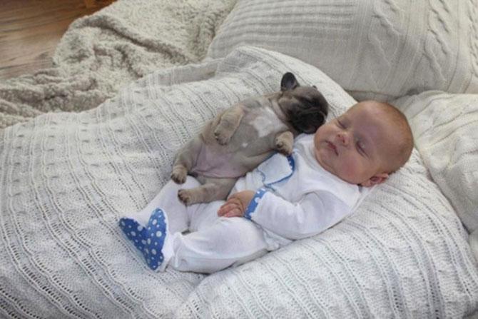 Bebelusul si bulldogii francezi - Poza 9