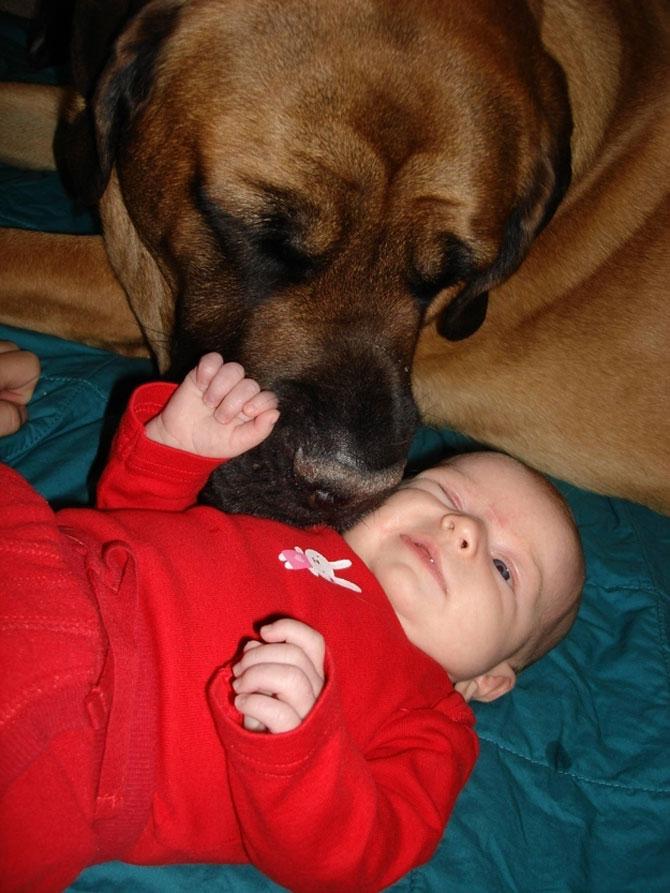 Bebelusi si catei, la prima intalnire - Poza 9