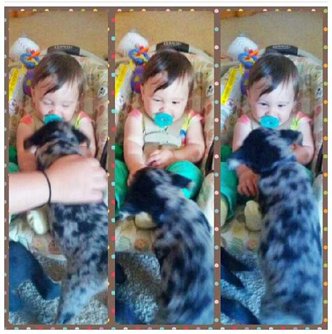 Bebelusi si catei, la prima intalnire - Poza 11