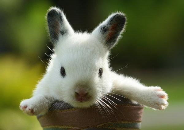 Atentie: Animale simpatice in 45 de poze! - Poza 8