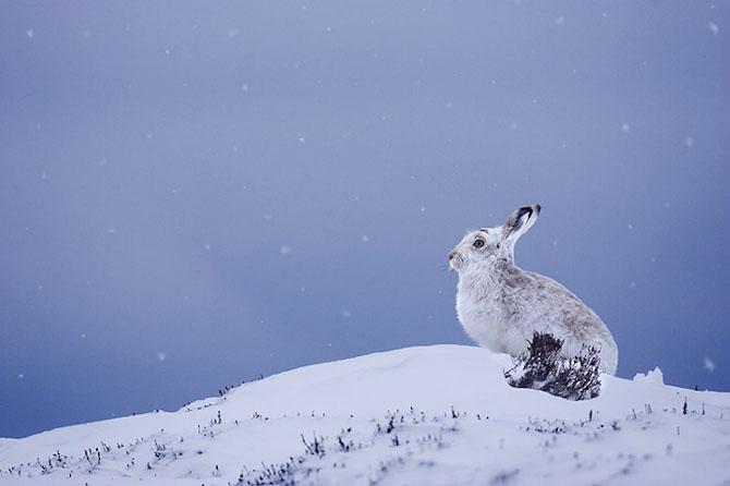 Spectacolul naturii in 25 de fotografii - Poza 10