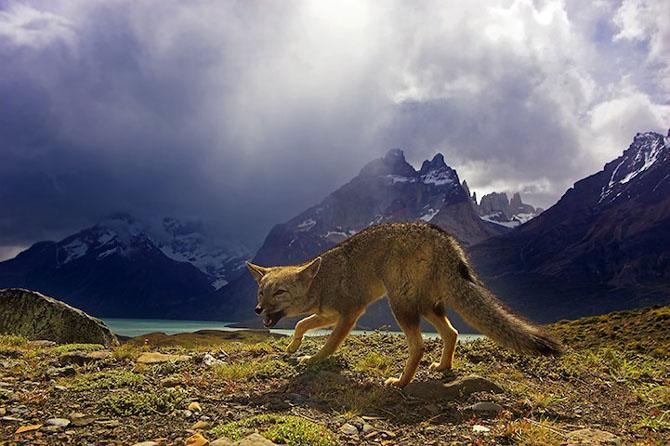 Spectacolul naturii in 25 de fotografii - Poza 12