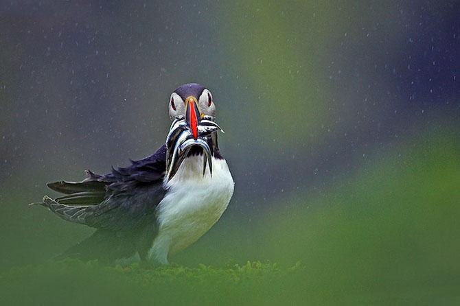 Spectacolul naturii in 25 de fotografii - Poza 15