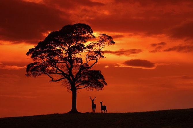 Spectacolul naturii in 25 de fotografii - Poza 16