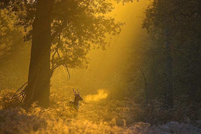 Spectacolul naturii in 25 de fotografii - Poza 2
