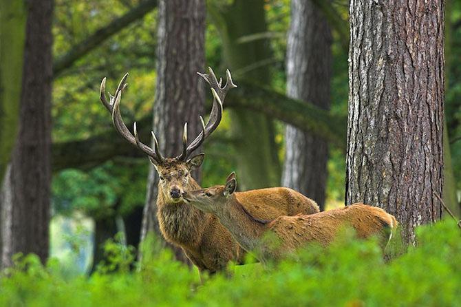 Spectacolul naturii in 25 de fotografii - Poza 17