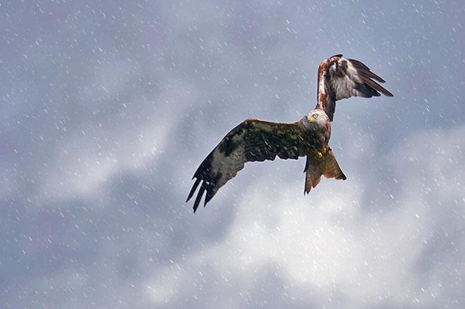 Spectacolul naturii in 25 de fotografii - Poza 18