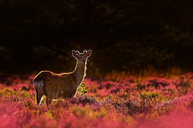 Spectacolul naturii in 25 de fotografii - Poza 19