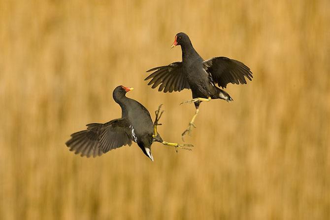 Spectacolul naturii in 25 de fotografii - Poza 21