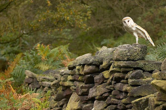Spectacolul naturii in 25 de fotografii - Poza 24
