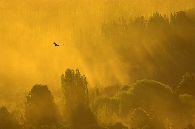 Spectacolul naturii in 25 de fotografii - Poza 25