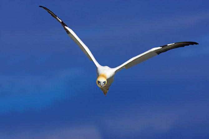 Spectacolul naturii in 25 de fotografii - Poza 5