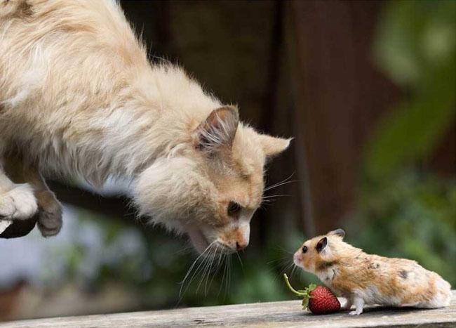 Ce animale simpatice! - Poza 15