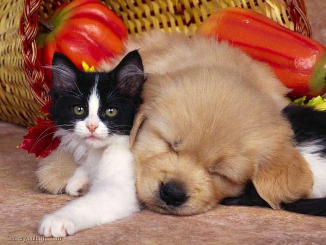 Ce animale simpatice! - Poza 24