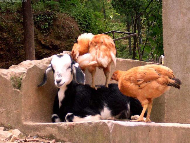 Ce animale simpatice! - Poza 14