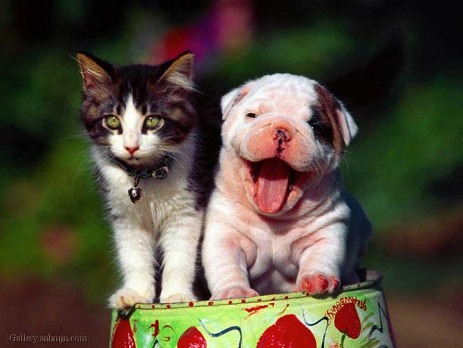 Ce animale simpatice! - Poza 1