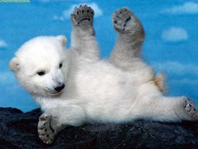 Ce animale simpatice! - Poza 7