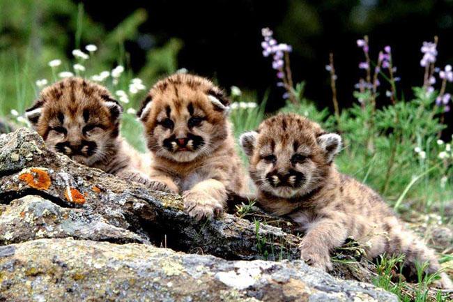 Ce animale simpatice! - Poza 11