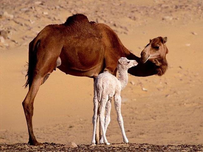 Ce animale simpatice! - Poza 32