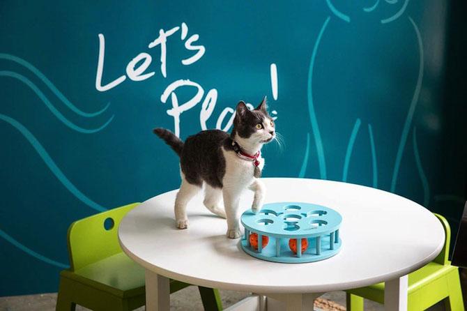 Prima cafenea pentru pisici din SUA - Poza 1
