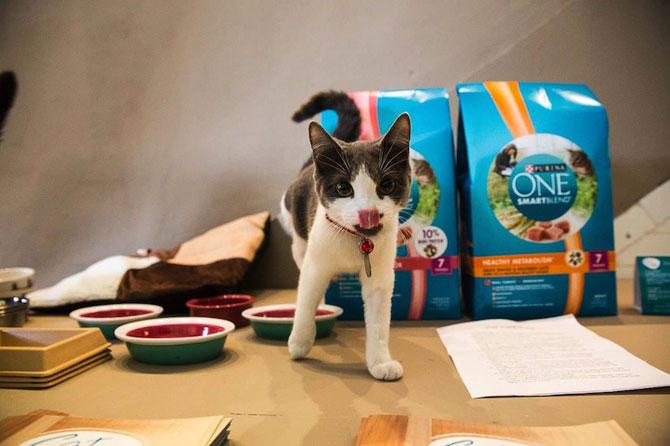 Prima cafenea pentru pisici din SUA - Poza 2