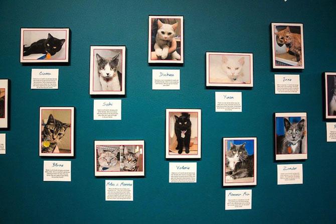 Prima cafenea pentru pisici din SUA - Poza 3